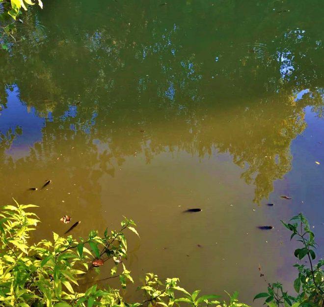 Rio Sousa Poluição